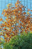 五颜六色的在秋天的树现代大厦 免版税库存照片