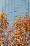 五颜六色的在秋天的树现代大厦 库存图片