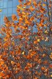五颜六色的在秋天的树现代大厦 图库摄影