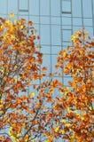 五颜六色的在秋天的树现代大厦 免版税图库摄影