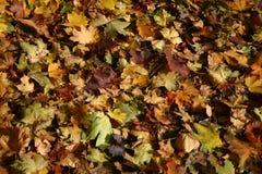 五颜六色的地毯 免版税图库摄影