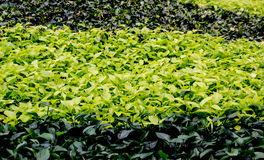 五颜六色的地被植物 图库摄影