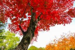 五颜六色的场面在一个森林里在秋天期间 免版税图库摄影