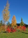 五颜六色的域高尔夫球周围的结构树 库存照片