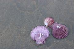 五颜六色的壳顶视图在黑暗含沙的在背景的热带海滩 免版税库存照片
