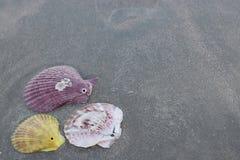 五颜六色的壳顶视图在黑暗含沙的在背景的热带海滩 图库摄影
