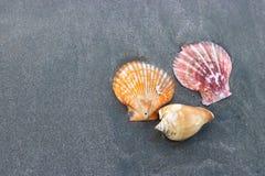 五颜六色的壳顶视图在黑暗含沙的在背景的热带海滩 免版税库存图片