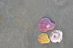 五颜六色的壳顶视图在黑暗含沙的在背景的热带海滩 库存图片