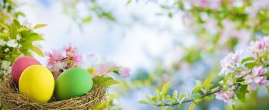五颜六色的复活节彩蛋在春天 免版税图库摄影