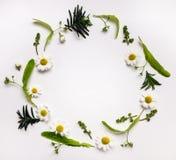 五颜六色的夏天圆的框架用草本和花 图库摄影