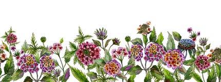 五颜六色的夏天宽横幅 美丽的马樱丹属开花与在白色背景的绿色叶子 水平的模板 向量例证
