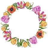 五颜六色的夏天郁金香 花卉植物的花 框架边界装饰品正方形 库存照片