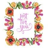 五颜六色的夏天郁金香 花卉植物的花 框架边界装饰品正方形 库存图片