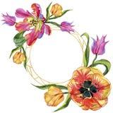 五颜六色的夏天郁金香 花卉植物的花 框架边界装饰品正方形 免版税库存照片