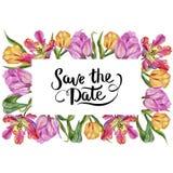 五颜六色的夏天郁金香 花卉植物的花 框架边界装饰品正方形 免版税库存图片