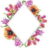 五颜六色的夏天郁金香 花卉植物的花 框架边界装饰品正方形 图库摄影