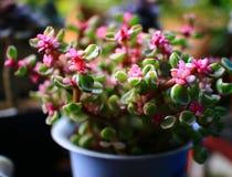 五颜六色的多汁盆栽植物 库存图片