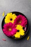 五颜六色的大丁草开花漂浮在一个黑碗 背景灰色石头 顶视图 复制空间 免版税库存照片