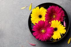 五颜六色的大丁草开花漂浮在一个黑碗 背景灰色石头 顶视图 复制空间 免版税库存图片