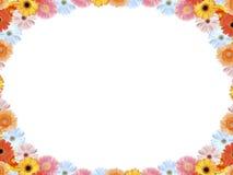 五颜六色的大丁草 免版税库存图片