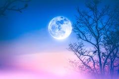 五颜六色的天空风景,有雾摇摆在干燥的树之间 免版税图库摄影