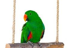 五颜六色的夫妇金刚鹦鹉坐日志。 免版税库存照片