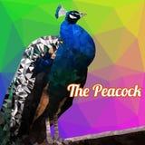 五颜六色的孔雀多角形传染媒介 免版税库存图片