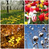 五颜六色的季节 库存图片