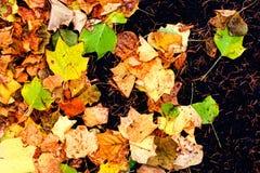 五颜六色的室外秋天概念 秋天与叶子的背景关闭 免版税库存图片