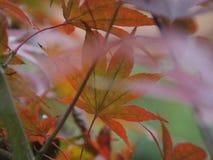 五颜六色的密林的传说 库存照片