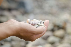 五颜六色的小卵石在手上 免版税库存图片