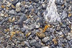 五颜六色的小卵石在水中 图库摄影