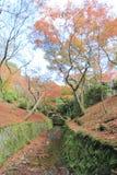 五颜六色的小径在一个美丽的庭院里 免版税图库摄影