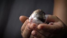 五颜六色的小猫在妇女手上 股票录像