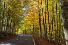 五颜六色的山毛榉森林在托斯卡纳 库存图片