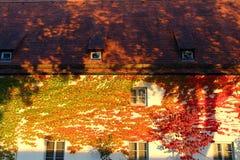 五颜六色的常春藤覆盖的房子门面 免版税库存照片
