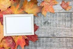 五颜六色的干燥槭树离开与照片框架在老木backgro 库存图片