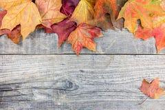 五颜六色的干燥秋季槭树在灰色难看的东西木板离开 库存图片