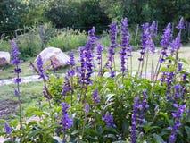 五颜六色的庭院在夏天 库存图片