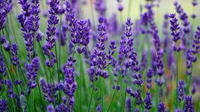 五颜六色的庭院场面在春天 免版税库存图片