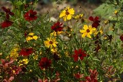 五颜六色的庭院花 图库摄影