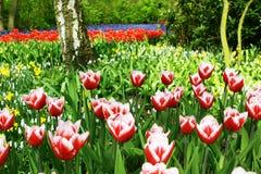 五颜六色的庭院 免版税图库摄影