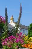 五颜六色的庭院 库存照片