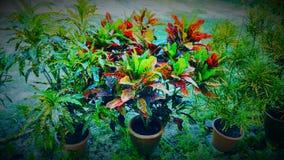 五颜六色的庭院 免版税库存照片