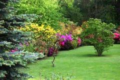 五颜六色的开花的灌木在春天庭院里 免版税库存图片