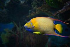 五颜六色的异乎寻常的鱼 免版税库存照片