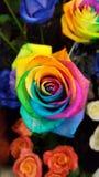 五颜六色的彩虹上升了 免版税库存照片