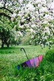 五颜六色的彩虹伞在开花的庭院里 春天,户外 库存照片