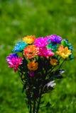 五颜六色的彩虹菊花特写镜头射击 免版税库存照片