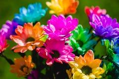 五颜六色的彩虹菊花特写镜头射击 库存照片